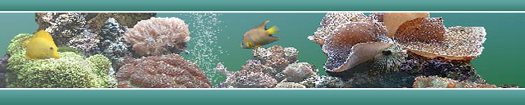 Saltwater_Aquariums